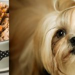 فروش بهترین غذا سگ خانگی شیتزو