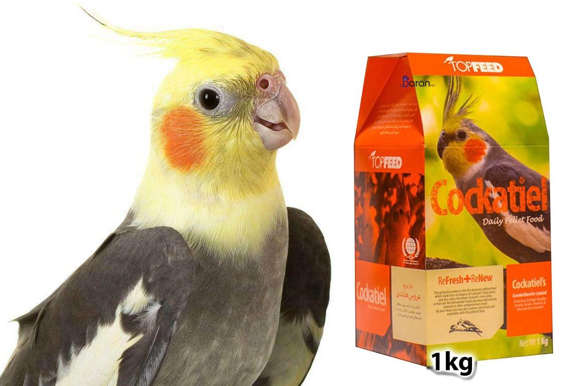 برندهای برتر خوراک پرنده عروس هلندی