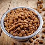 نمایندگی انواع غذا خشک سگ خارجی