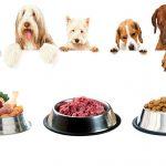 شرکت پخش غذا سگ ارزان قیمت