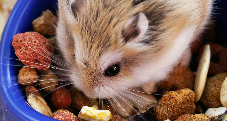 تاجران غذا خشک همستر در جهان