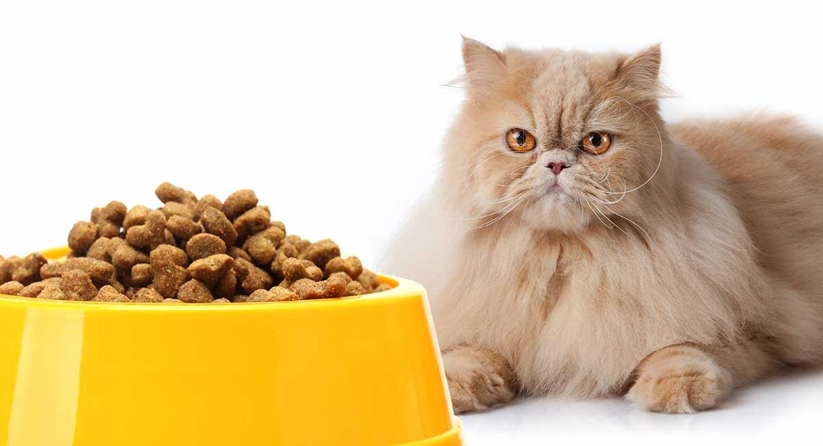 عمده فروشی خوراک گربه پرشین ارزان