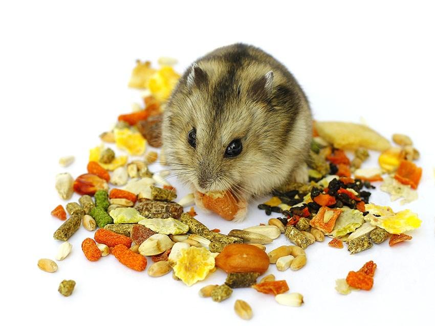 تولیدکننده برتر غذا همستر خانگی در ایران