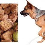 عمده فروشی خوراک سگ نگهبان مفید