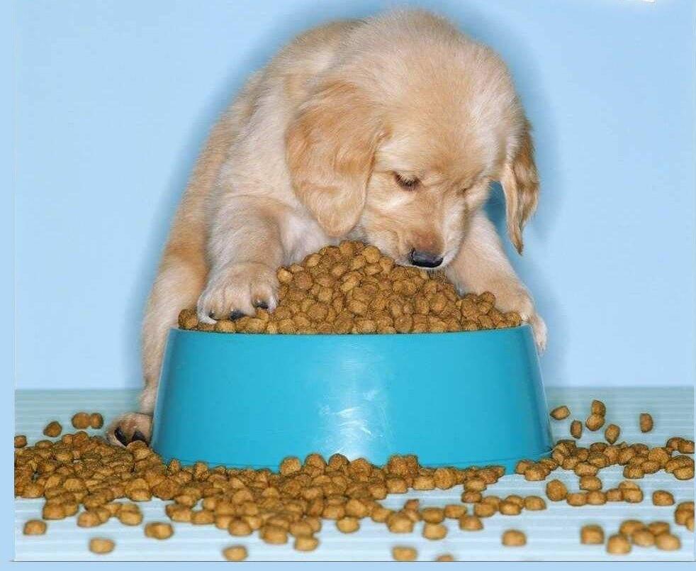 بهترین غذای سگ ایرانی چیست؟