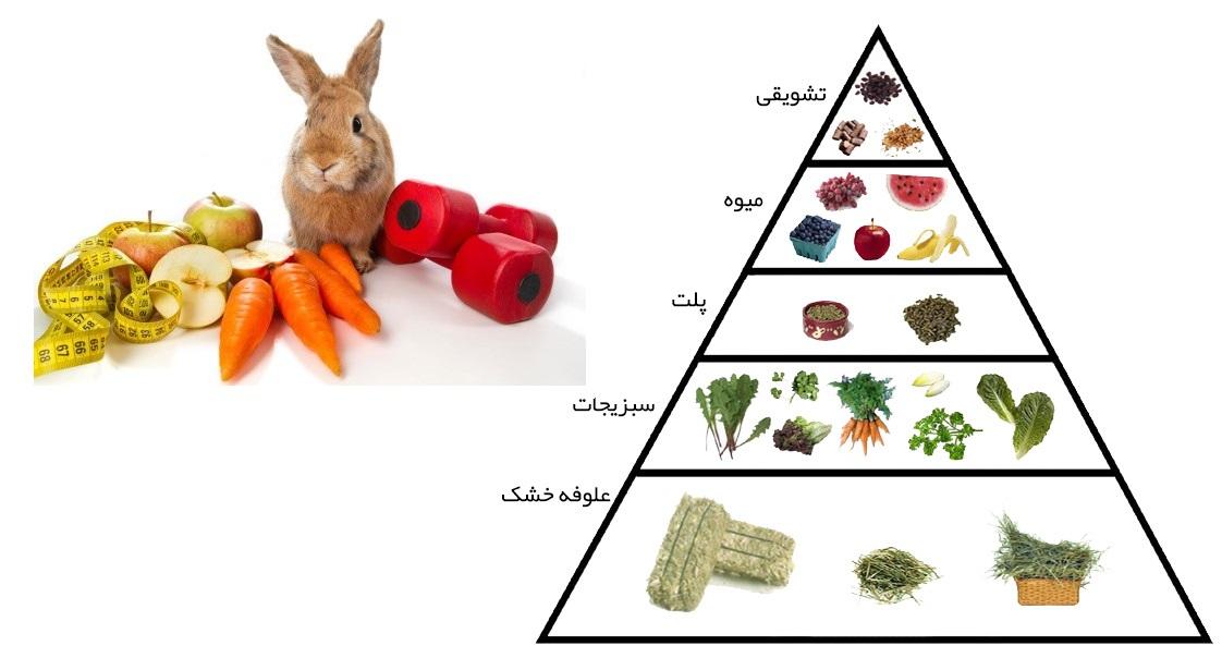 جدول ارزش غذایی و کالری غذا خرگوش پرمیوم