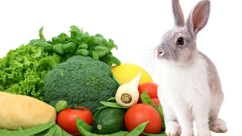 غذا اصلی خرگوش خانگی کوچک چیست؟