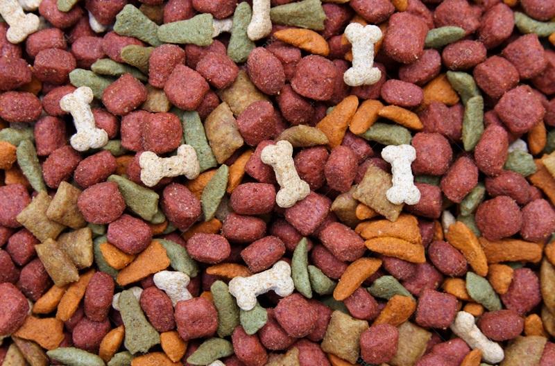 پخش مستقیم غذا سگ خارجی ارزان