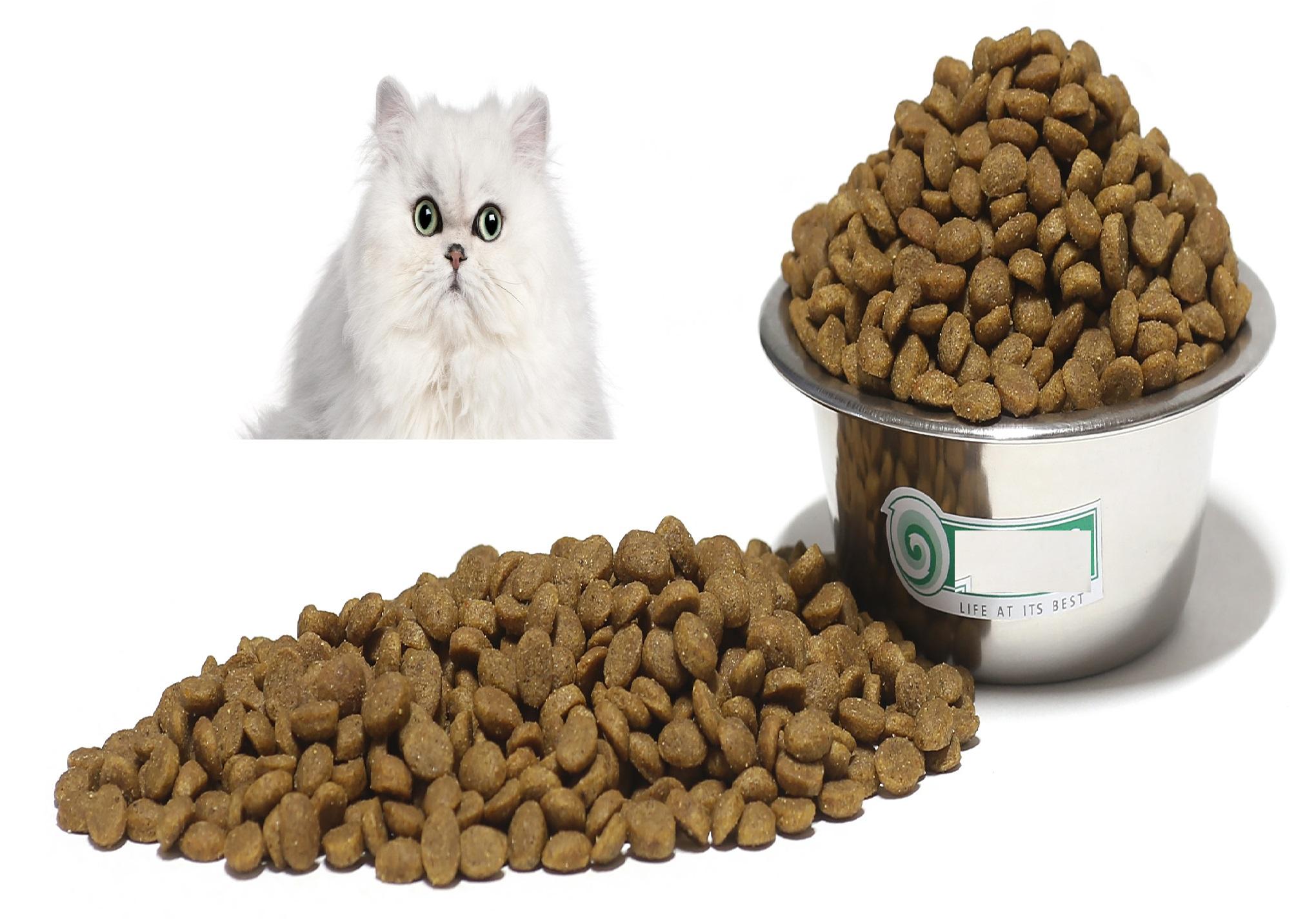 قیمت عمده خوراک کامل گربه پرشین