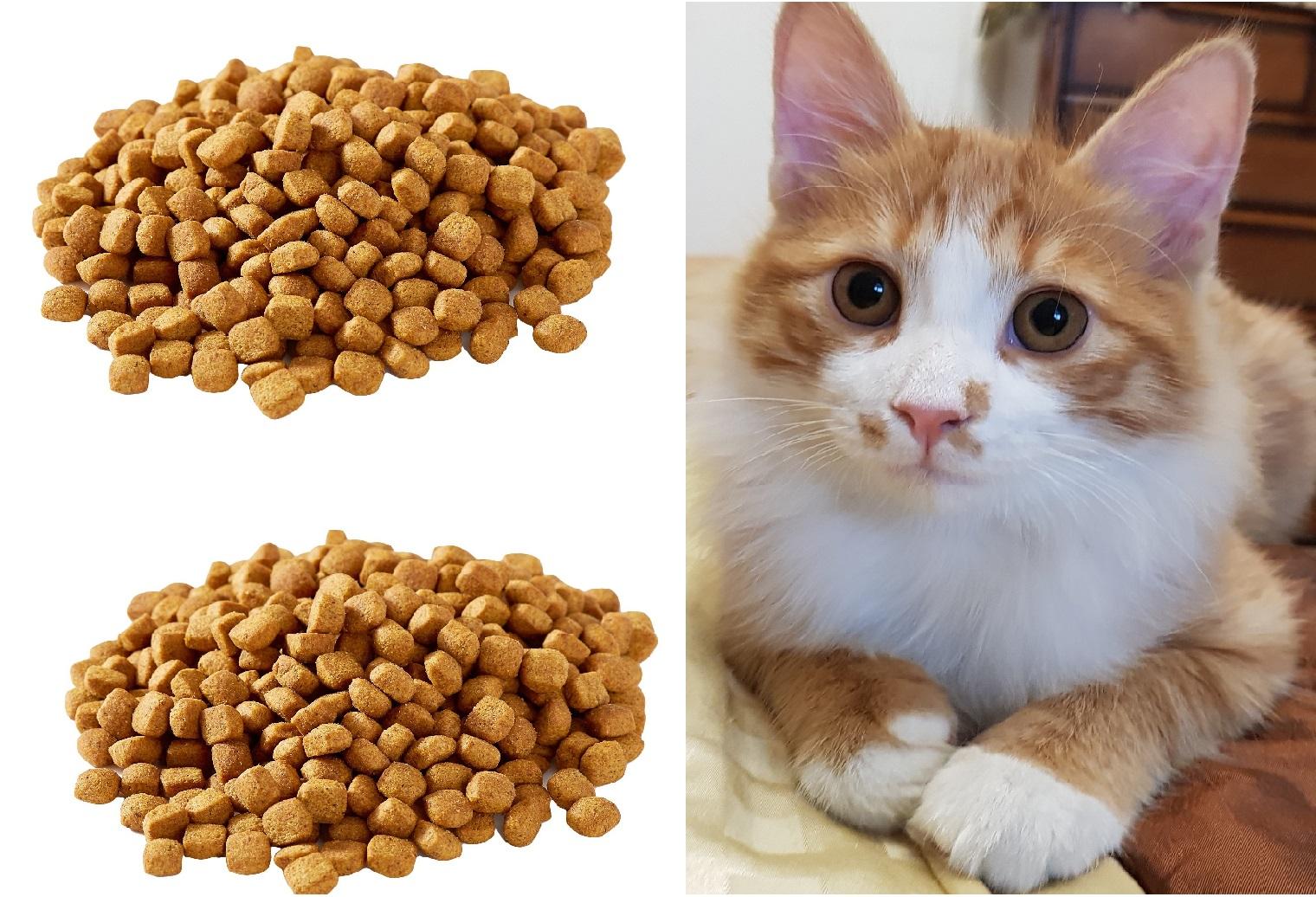 فروش عمده خوراک گربه خانگی برند ایرانی
