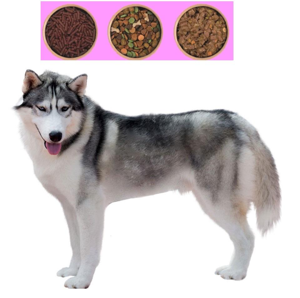 نماینده فروش بهترین غذا سگ حمایتی وارداتی