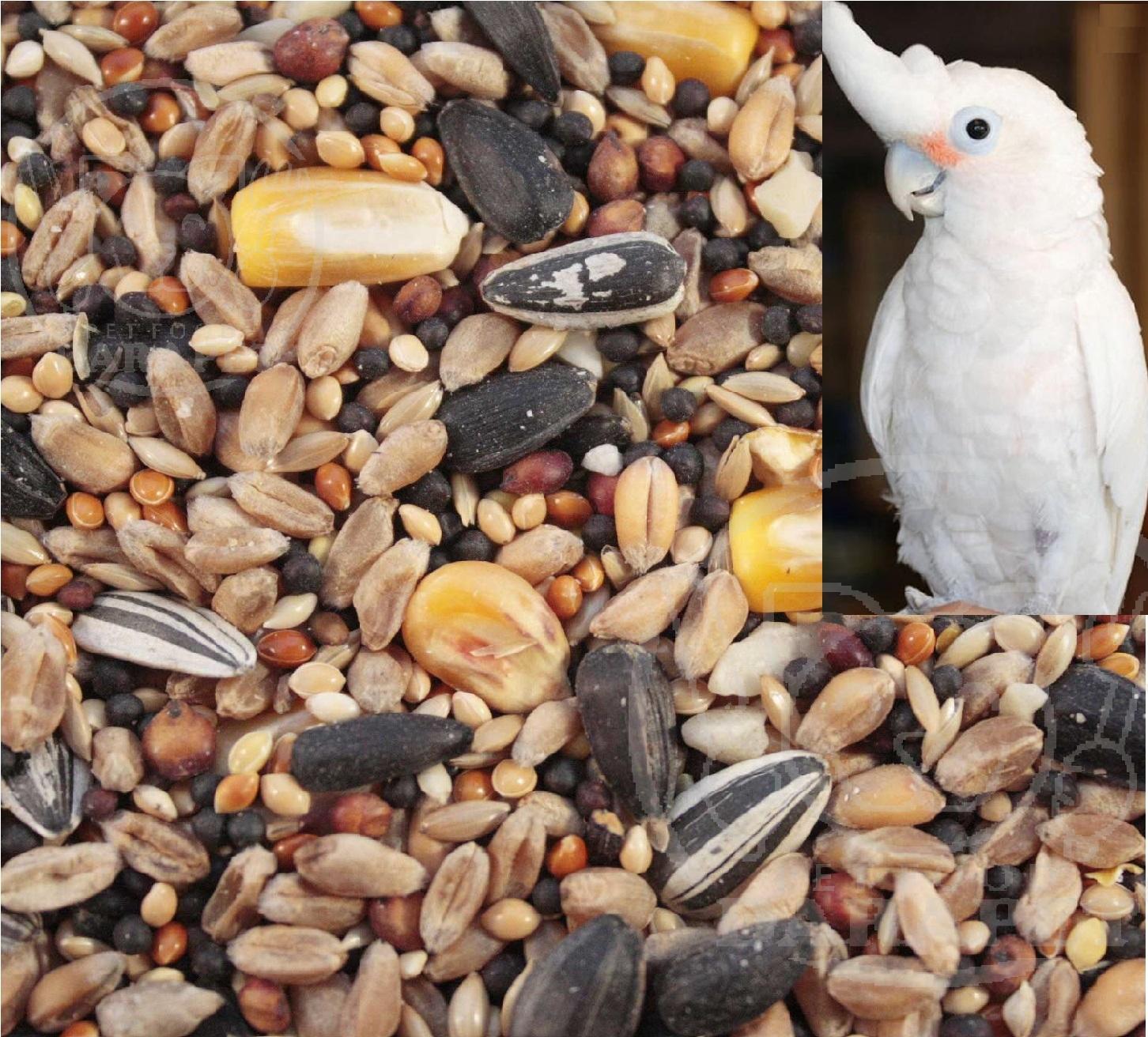 کلی فروشی غذای پرنده طوطی مقوی