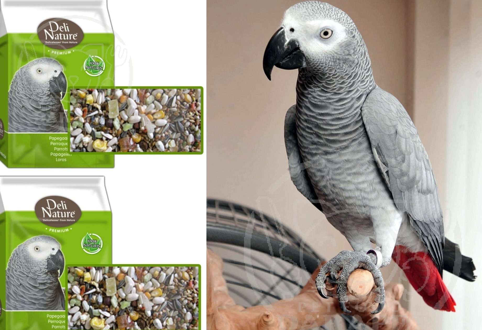 مرکز خرید خوراک پرنده کاسکو دم قرمز