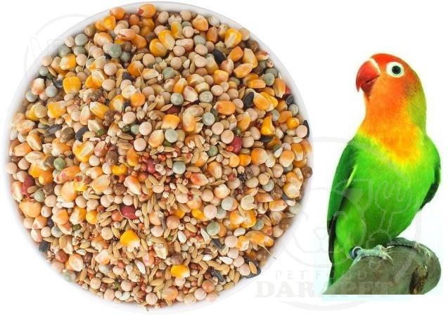 بازار اصلی غذای پرنده کوتوله در مشهد