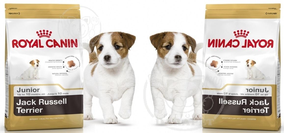 بازار داخلی غذای سگ خانگی تریر