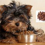 خرید غذا صبحانه سگ ارزان قیمت