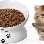 فروش خوراک مقوی بچه گربه چند روزه