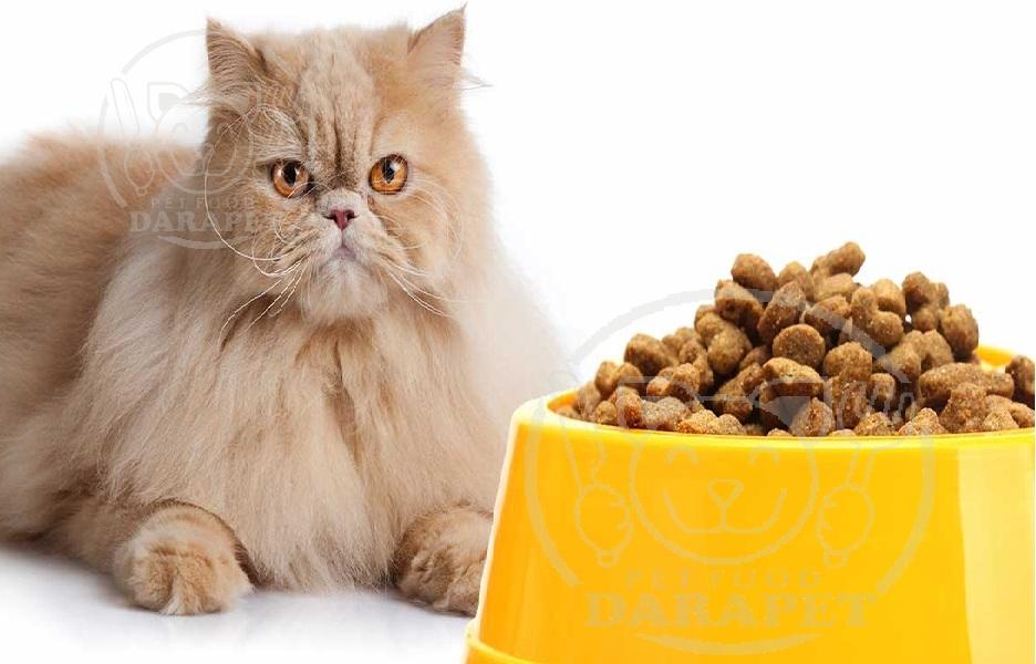 شرکت توزیع خوراک گربه پرشین