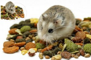 مرجع خرید خوراک همستر خانگی