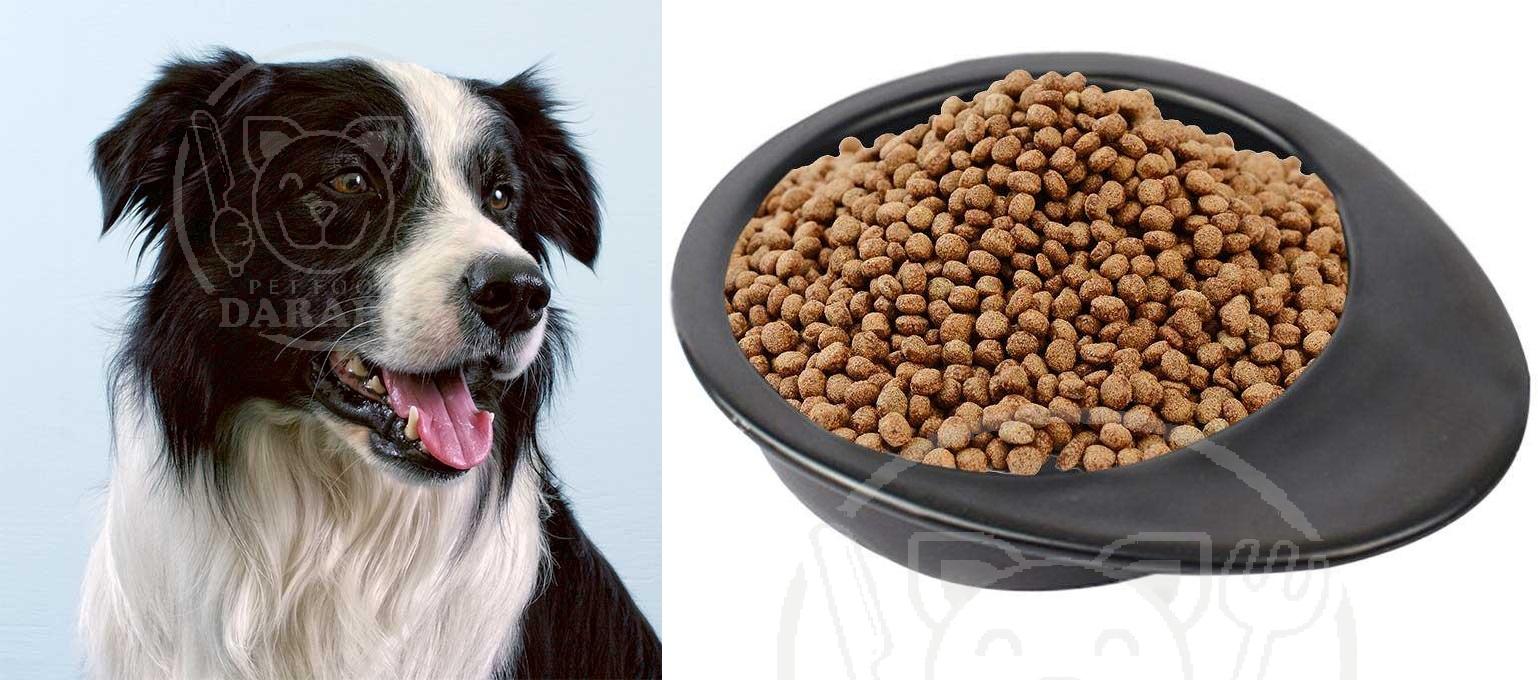 تغییرات قیمت خوراک سگ گله در سال 99