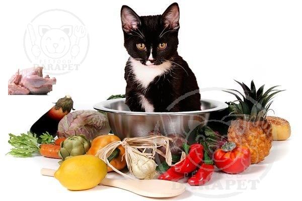 اهمیت تنوع غذایی برای سلامت گربه خانگی