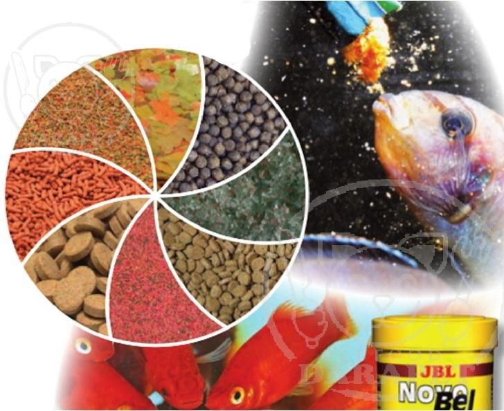 راهنمای استفاده از خوراک مناسب ماهیان