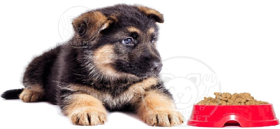 خوراک مناسب برای تغذیه سگ ژرمن دو ماهه