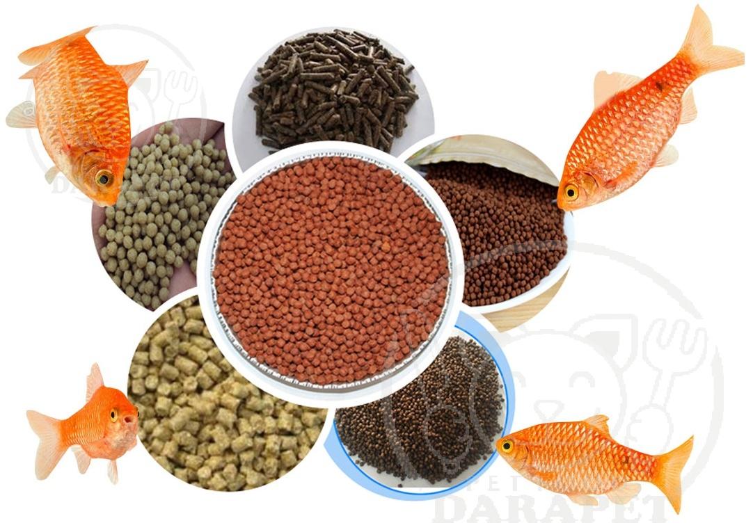 نکات مهم در رژیم غذایی ماهیان آکواریومی
