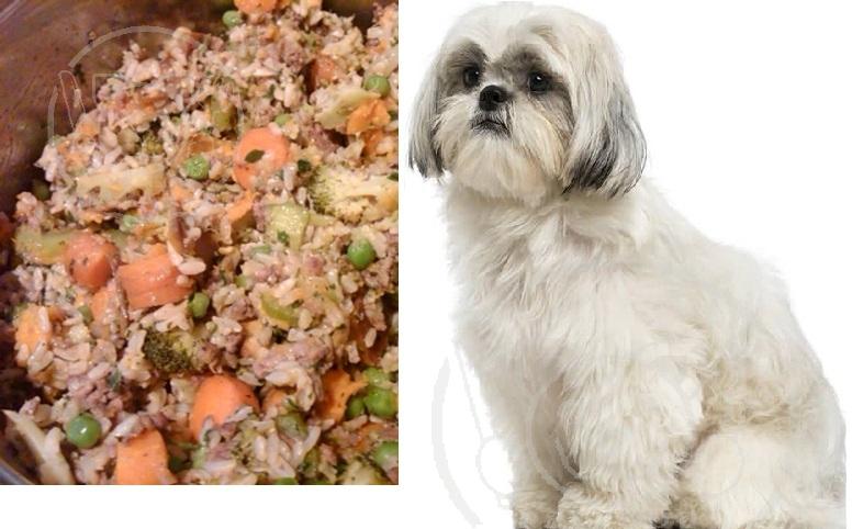 مشخصات مهم غذا سگ خانگی چیست؟