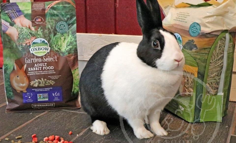 مقایسه انواع غذا خرگوش بسته بندی شده