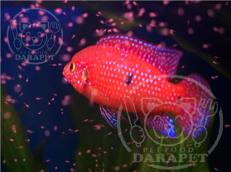 غذای اختصاصی ماهی آکواریوم چیست؟