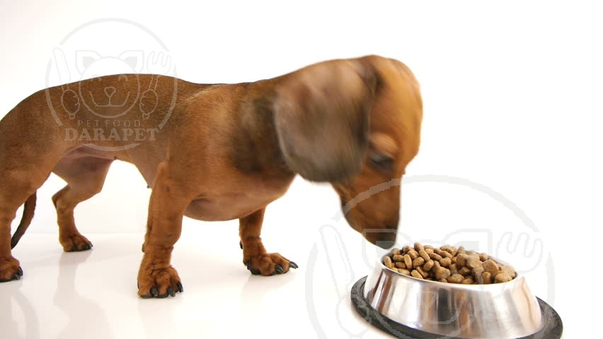 چرا سگ باید غذای مخصوص نژادش را بخورد؟