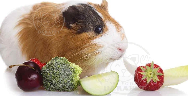 خوکچه هندی چه نوع غذایی می خورد؟