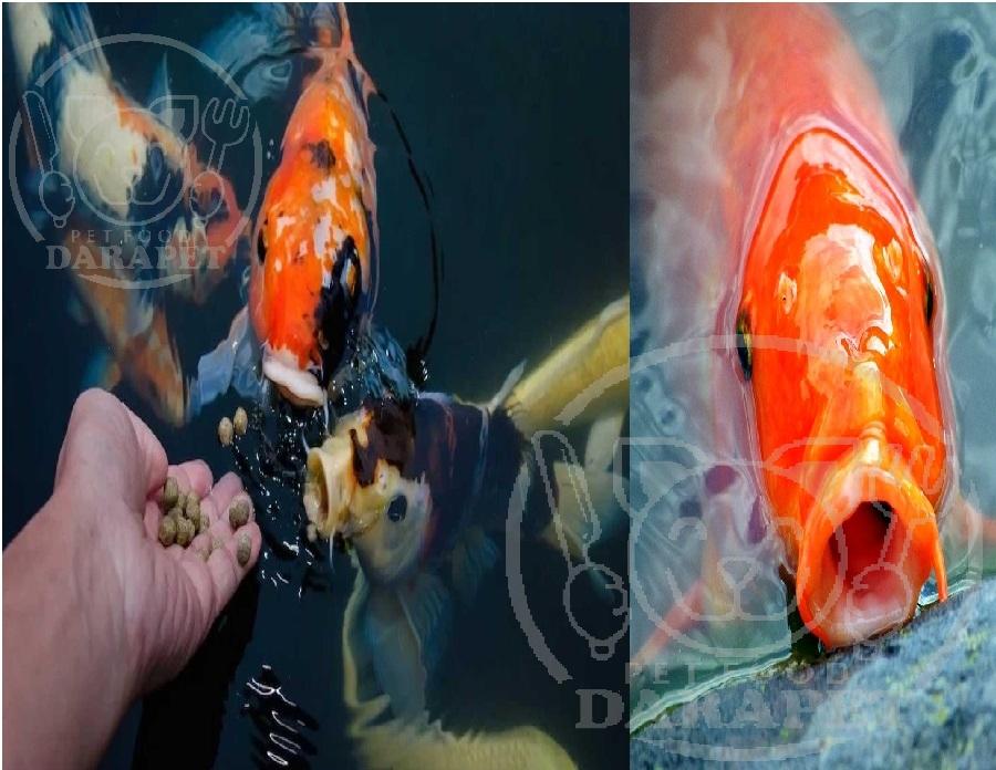 وجه تمایز غذا ماهی آکواریومی از ماهی استخری