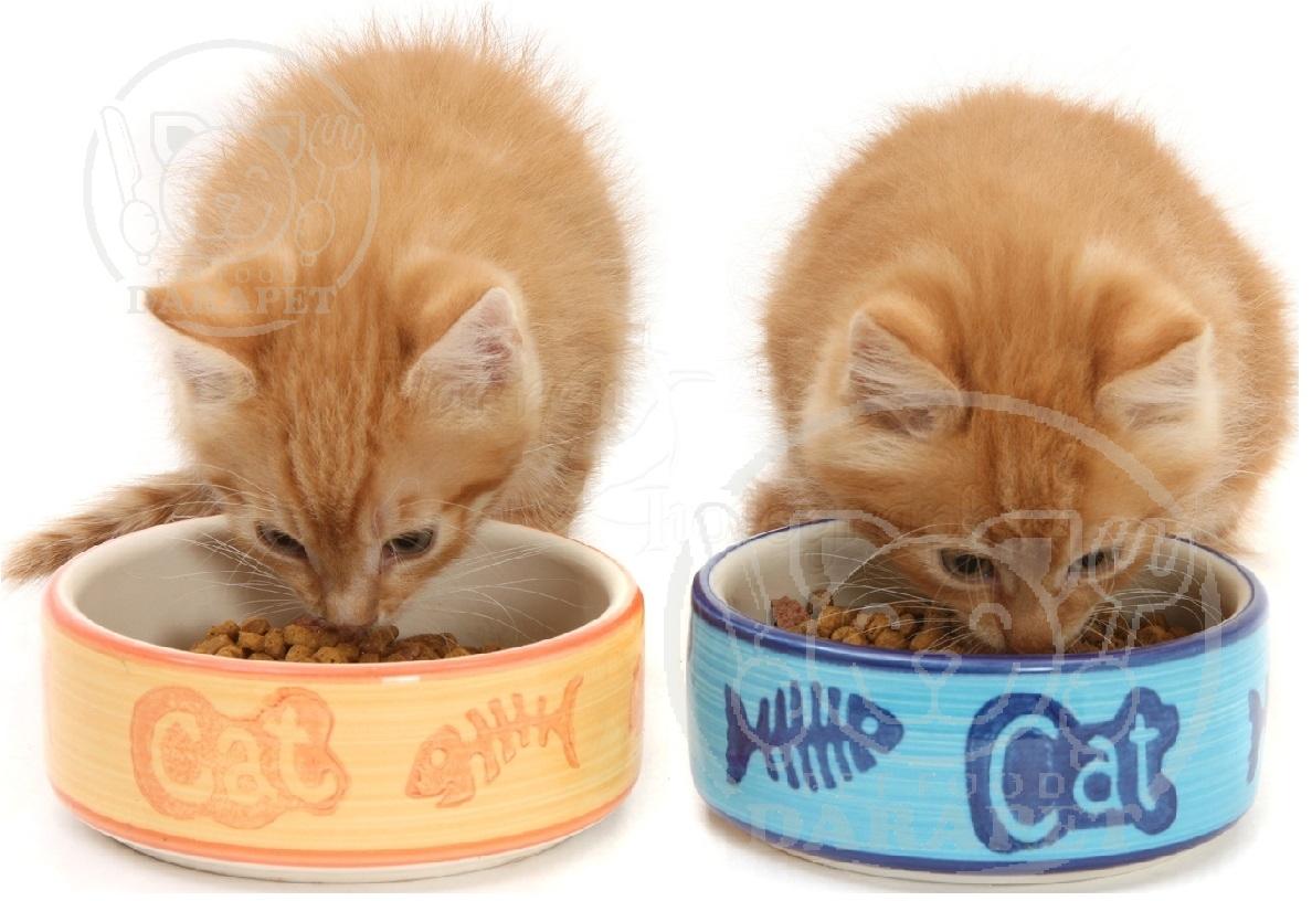 اهیمت ارزش غذایی خوراک بچه گربه