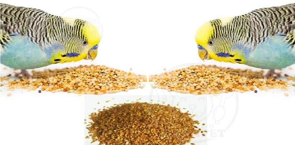نمایندگی خوراک پرنده ویژه جوجه کشی مرغ عشق