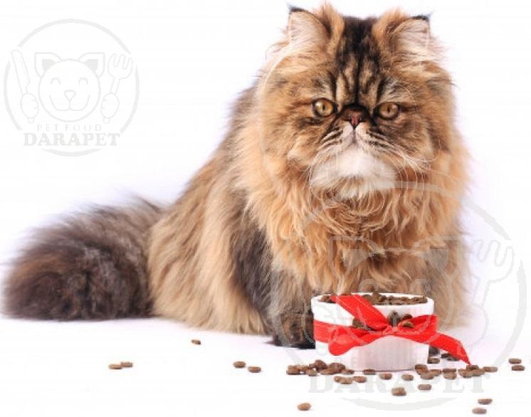 صادرات بهترین خوراک گربه پرشین