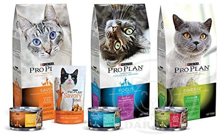 فروشنده انواع خوراک گربه خانگی قیمت مناسب
