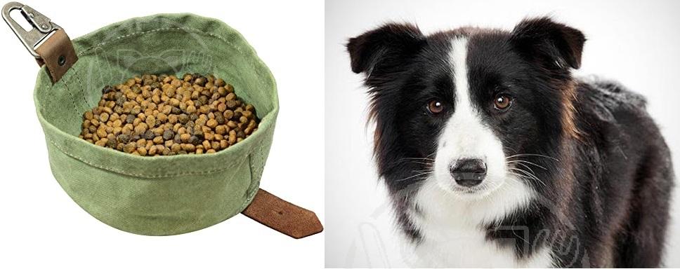 فروش بهترین خوراک سگ گله قیمت مناسب
