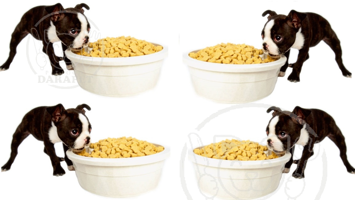 فروش عمده انواع غذا سگ خانگی