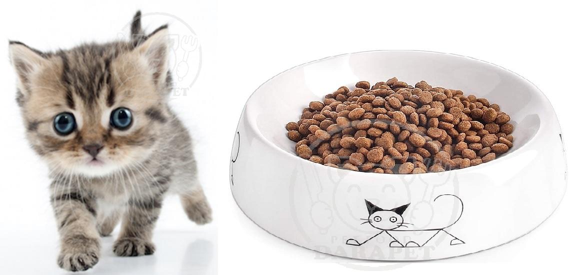 راهنمای جامع خرید خوراک بچه گربه
