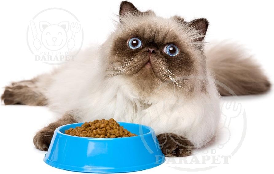 عرضه استثنایی خوراک گربه پرشین