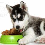 قیمت روز غذای سگ ارزان