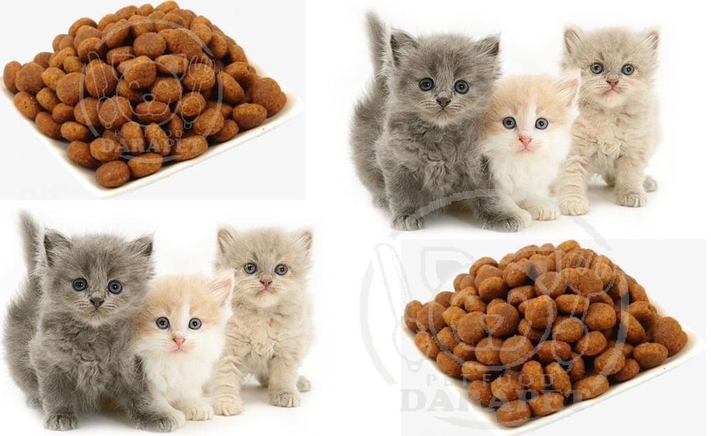 فروشنده بهترین خوراک گربه فله
