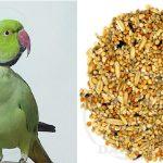 شرکت پخش خوراک طوطی ملنگو