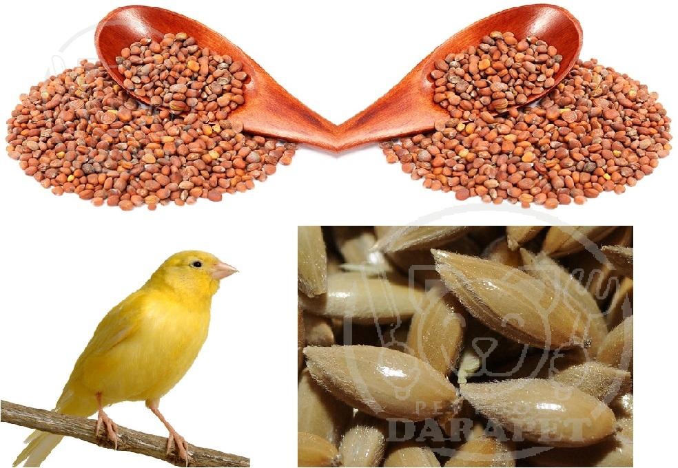 پخش انواع خوراک قناری مقوی