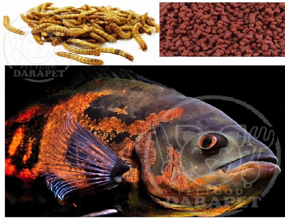 خرید عمده خوراک ماهی آکواریومی