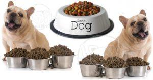 ارائه دهنده خوراک خشک سگ