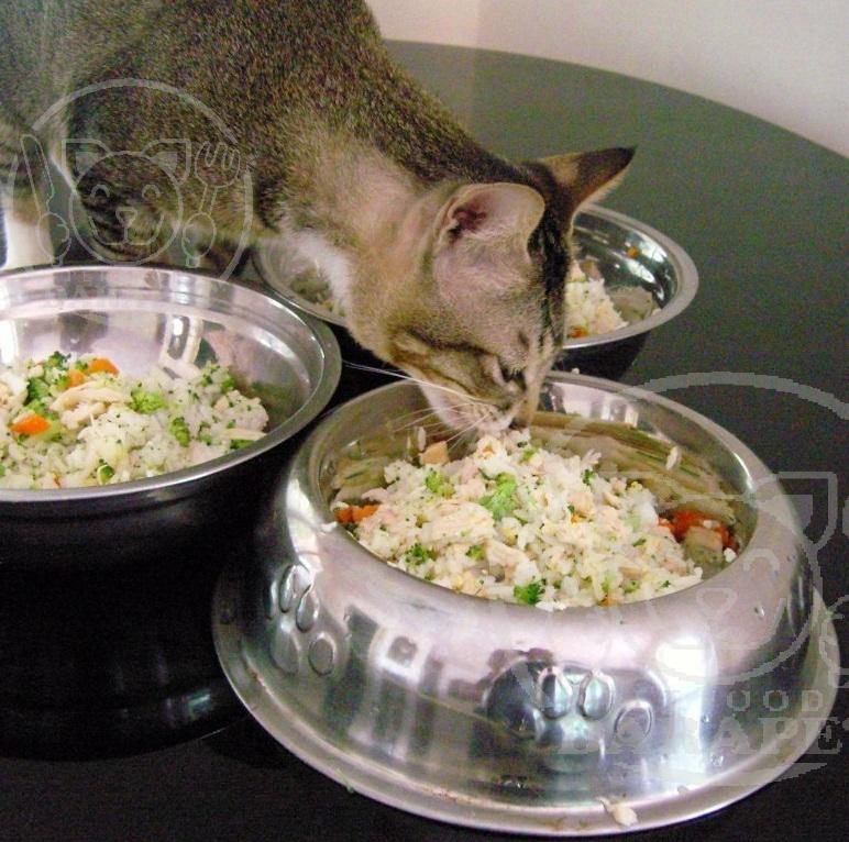 کیفیت انواع خوراک گربه