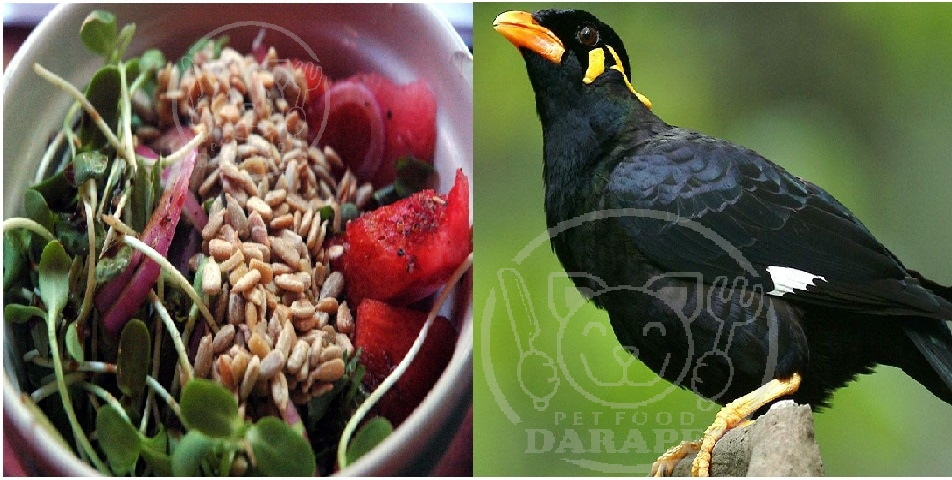 برنامه غذایی مفید برای مرغ مینا
